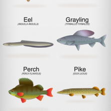 Coarse Fish Illustrations